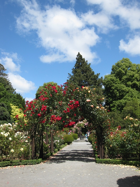 Entrance to rose garden in Christchurch Botanical Gardens